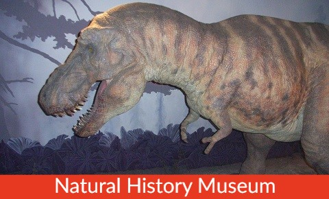 Family London Tours London Attraction Small Natural History Museum
